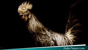 Agen Online Sabung Ayam