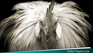 Situs Sabung Ayam Online s128
