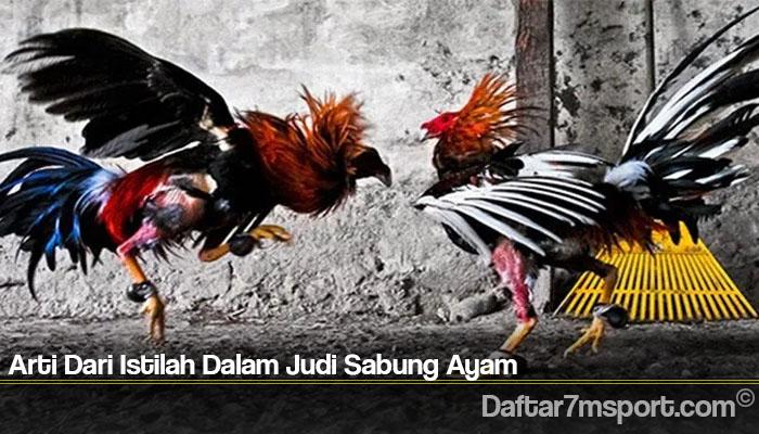 Arti Dari Istilah Dalam Judi Sabung Ayam