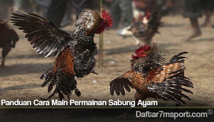 Panduan Cara Main Permainan Sabung Ayam